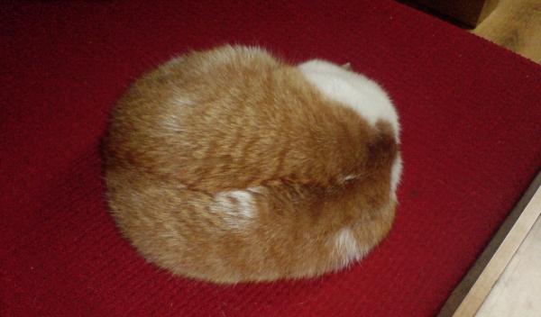 Chleb z kota, pieczony na wolnym ogniu...