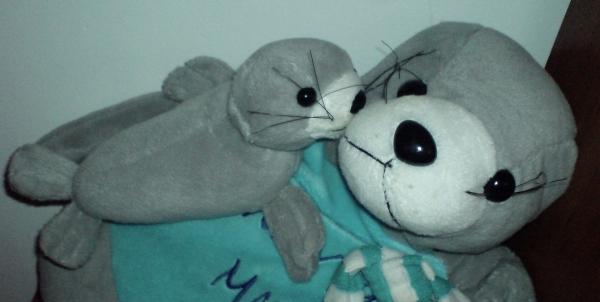 Te foki są żagańskie i nie dołączą do mojej kolekcji...