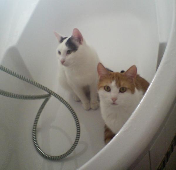 Czy ja ci wchodzę, jak się kąpiesz?