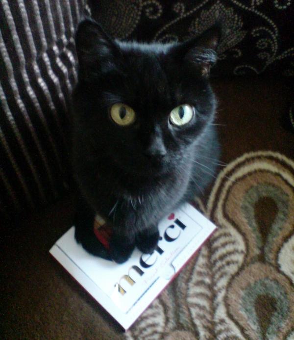 Jak to dobrze, że ten kot woli przynosić czekoladki zamiast rozszarpanych myszy.